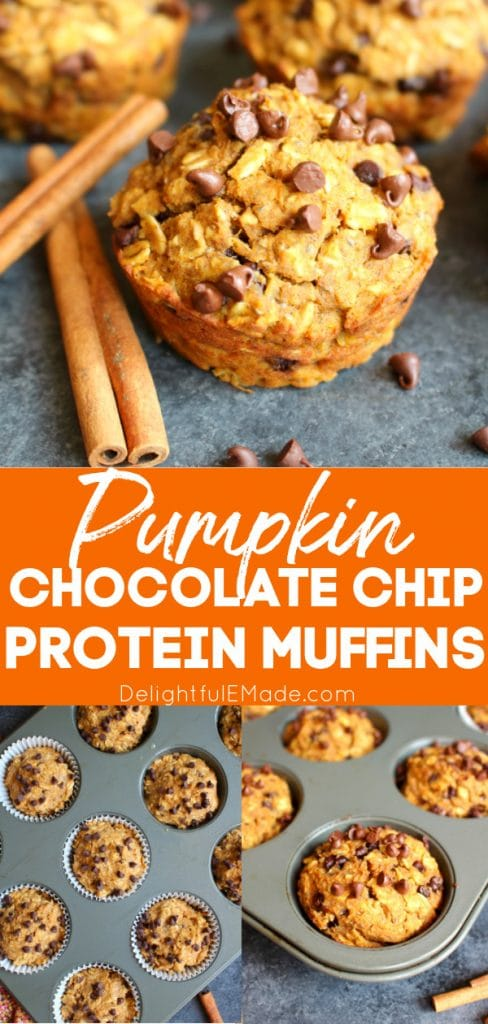 Pumpkin Chocolate Chip Protein Muffins, close up of muffins garnished with mini chocolate chips and cinnamon sticks.